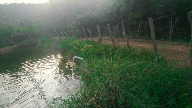 Vendo Fazenda de 122 hectares com psicultura - Foto 12