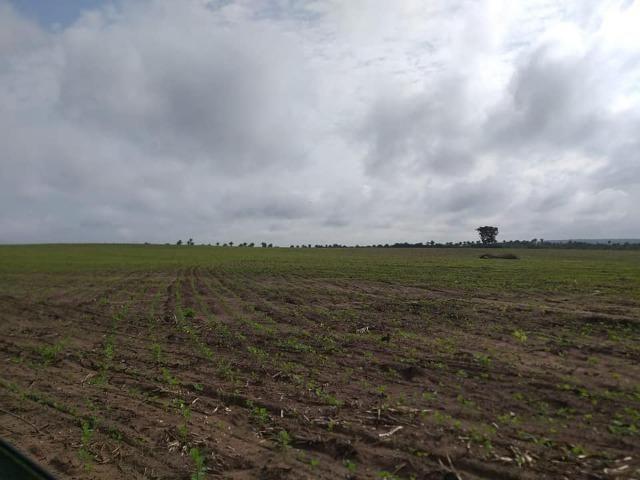 Vendo uma fazenda de 250 hectares em Caxias/MA ideal SOJA