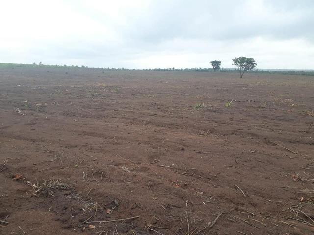 Vendo uma fazenda de 250 hectares em Caxias/MA ideal SOJA - Foto 6