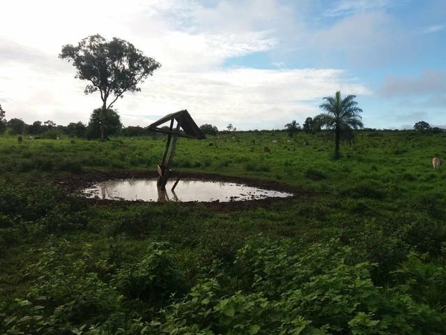 Fazenda em Grajaú, oportunidade - Foto 5