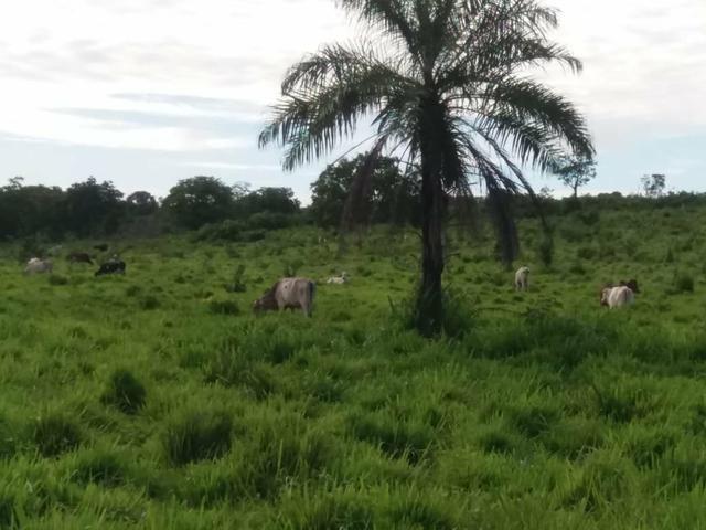 Fazenda em Grajaú, oportunidade - Foto 4