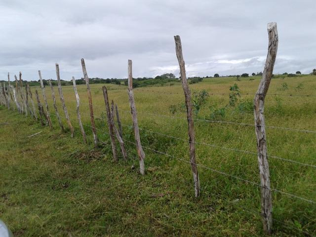 Fazenda com 63 há em brejinho, 10 barreiros, curral - Foto 16