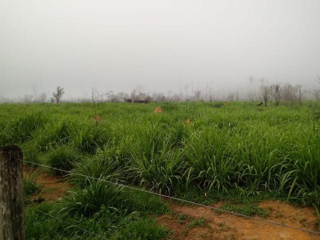 Vendo Fazenda em Novo Prigresso/PA - Foto 9
