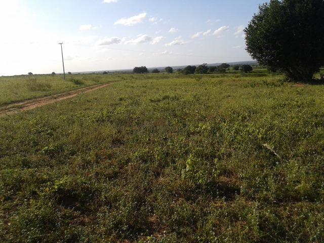 Fazenda com 290 há, casa, curral, 4 barreiros, muito pasto - Foto 18