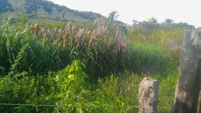 Vendo Fazenda de 122 hectares com psicultura - Foto 3