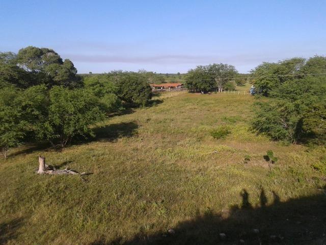 Fazenda com 290 há, casa, curral, 4 barreiros, muito pasto - Foto 13