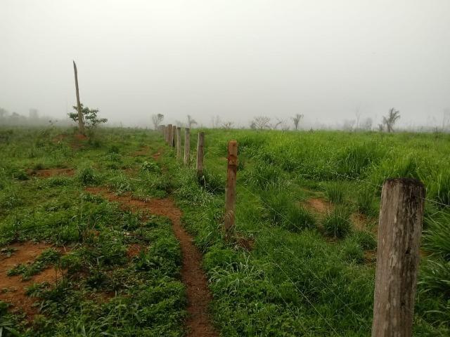 Vendo Fazenda em Novo Prigresso/PA - Foto 7