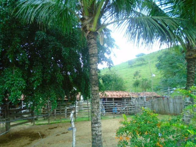 Código 8 - Sítio no bairro do Caju - Maricá com 9800m2 - Foto 10