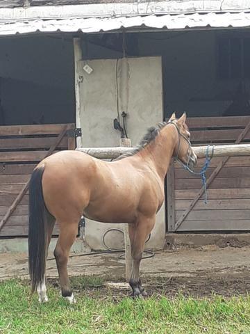 Cavalos - Foto 5