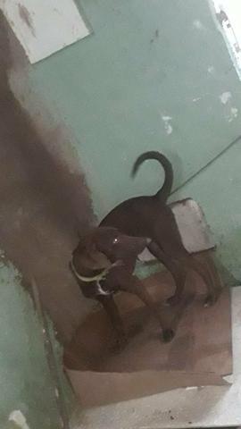 Doação de pet (cachorro) - Foto 5