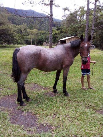Égua rosilha  - Foto 3