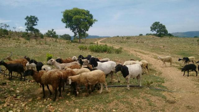 Fazenda Gado - 50 km de Cuiabá - 93 hectares