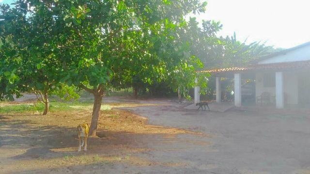 Vendo Fazenda de 122 hectares com psicultura - Foto 6