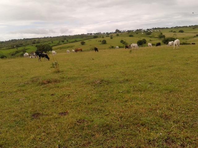 Fazenda com 63 há em brejinho, 10 barreiros, curral - Foto 10