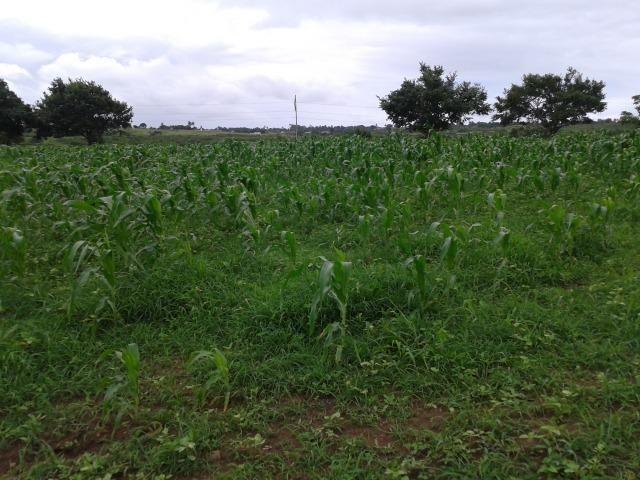 Fazenda com 63 há em brejinho, 10 barreiros, curral - Foto 9