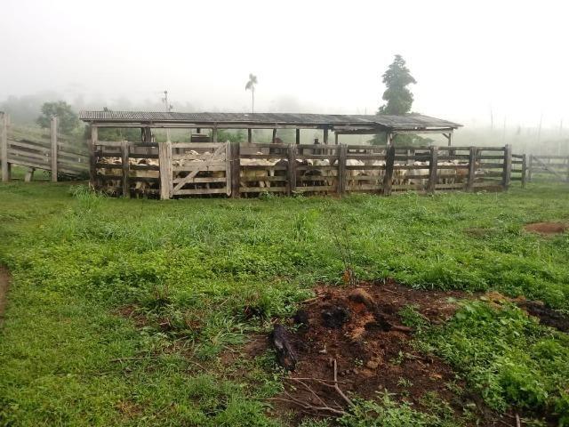 Vendo Fazenda em Novo Prigresso/PA - Foto 15