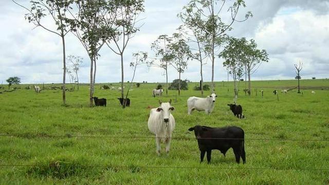 Arrendo Sua Fazenda 100 a 1000 Alq - Foto 9