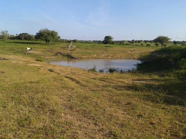 Fazenda com 290 há, casa, curral, 4 barreiros, muito pasto - Foto 12
