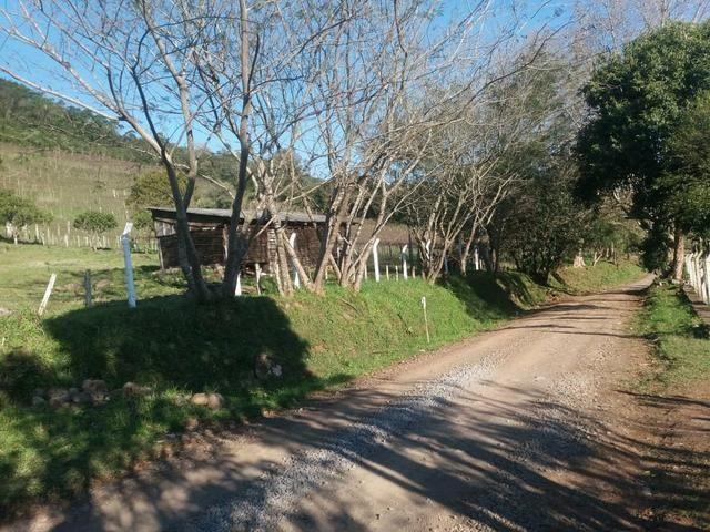 2.7 ha. linda chacara a apenas 7.5 km do centro de farroupilha - Foto 6