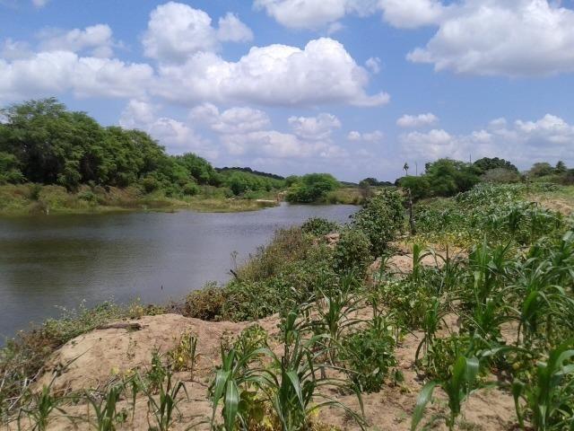 Fazenda com 62 há na br 304, com rio potengi, casa, deposito - Foto 14