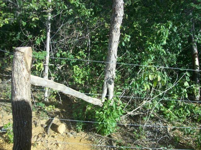 Fazenda com 6.000Ha à margem do Rio Preto! Em Mansidão BA. A 60km de Santa R. de Cassia - Foto 6