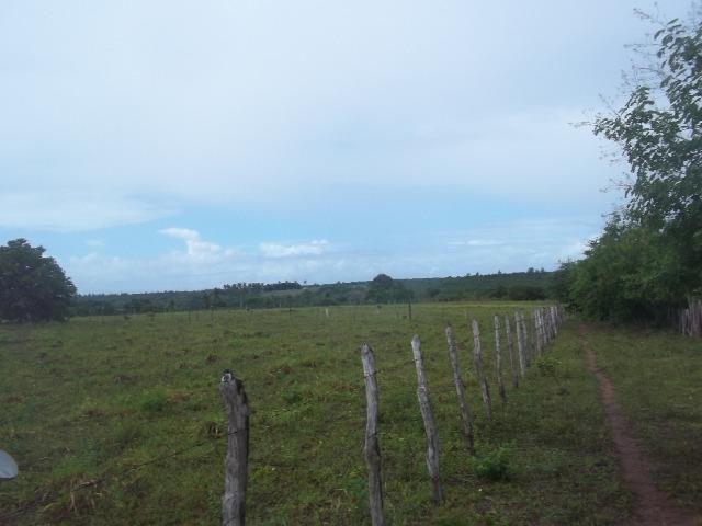 Fazenda com 110 há a 20 km de macaíba, 4 casas, 3 poços, riacho, barreiro - Foto 12