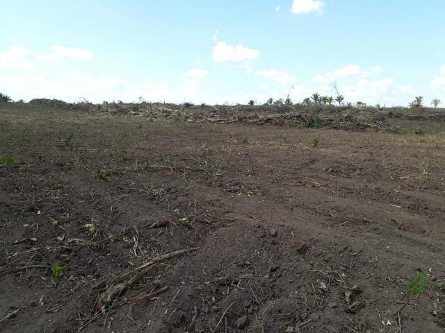 Vendo uma fazenda de 250 hectares em Caxias/MA ideal SOJA - Foto 7