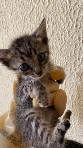 Gatinhos para adoção! - Foto 2