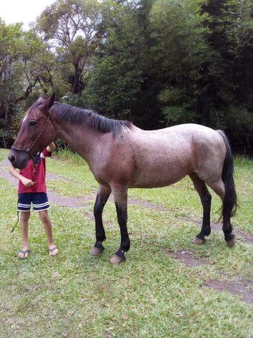 Égua rosilha  - Foto 2