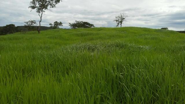 Fazenda de 15 alqueires entre Palmas\Paraiso