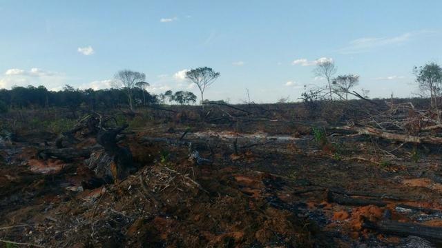 Fazenda de 200 ha em Araguacema, TO