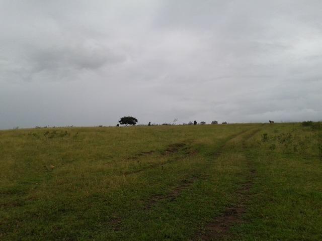 Fazenda com 63 há em brejinho, 10 barreiros, curral - Foto 20
