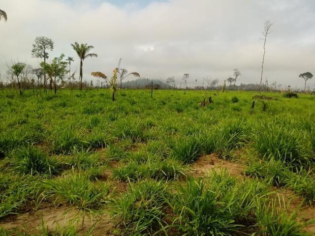 Vendo Fazenda em Novo Prigresso/PA - Foto 19