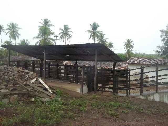 Fazenda com 110 há a 20 km de macaíba, 4 casas, 3 poços, riacho, barreiro - Foto 2