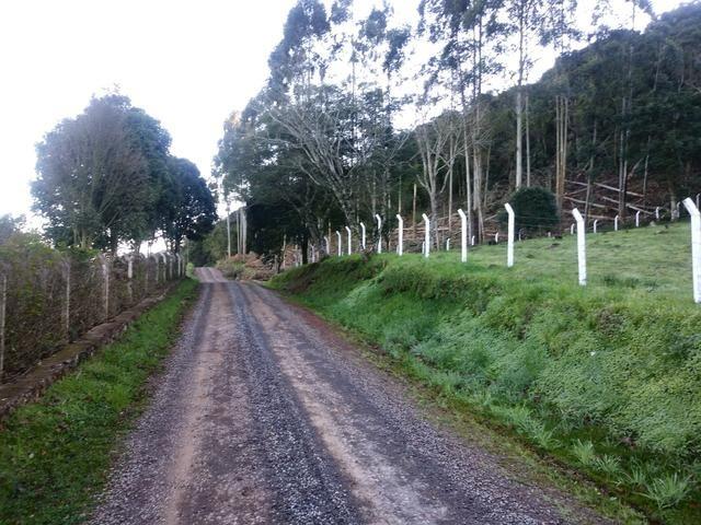2.7 ha. linda chacara a apenas 7.5 km do centro de farroupilha - Foto 3