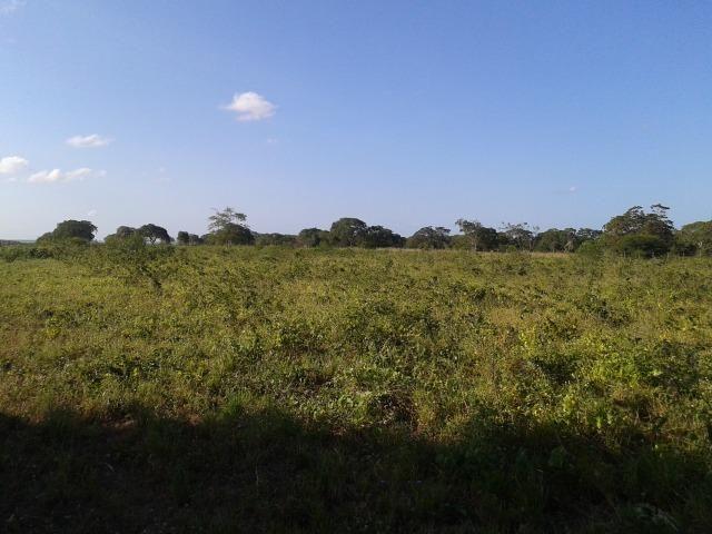 Fazenda com 290 há, casa, curral, 4 barreiros, muito pasto - Foto 7