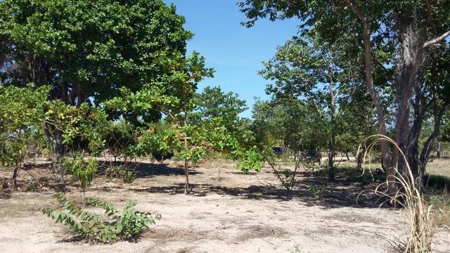 Fazenda com 6.000Ha à margem do Rio Preto! Em Mansidão BA. A 60km de Santa R. de Cassia - Foto 17