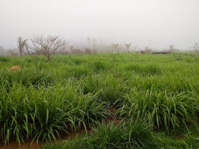 Vendo Fazenda em Novo Prigresso/PA - Foto 13