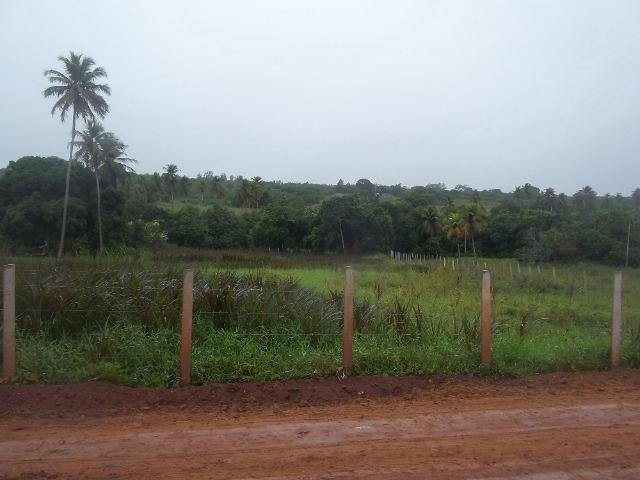 Fazenda com 110 há a 20 km de macaíba, 4 casas, 3 poços, riacho, barreiro - Foto 6
