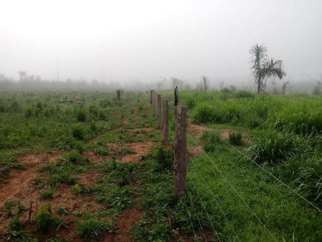 Vendo Fazenda em Novo Prigresso/PA - Foto 6