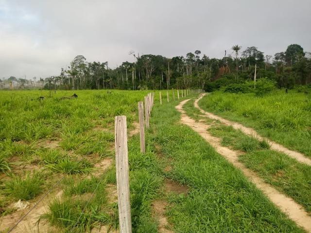 Vendo Fazenda em Novo Prigresso/PA - Foto 14