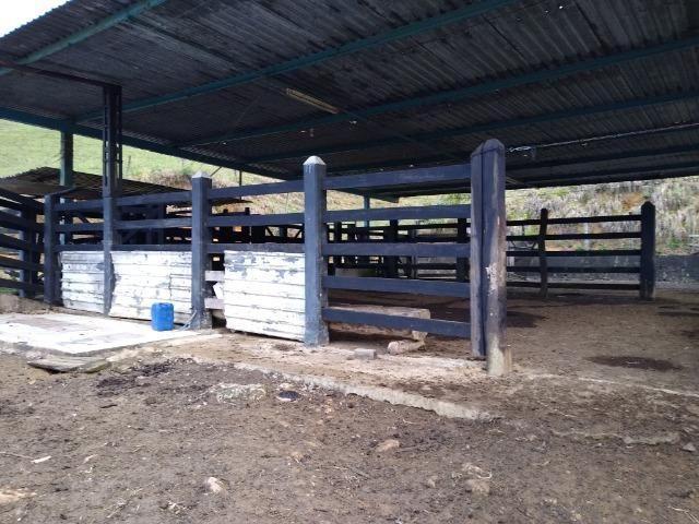 Fazenda Viana 20 alqueires - Foto 17