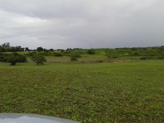 Fazenda com 63 há em brejinho, 10 barreiros, curral - Foto 8