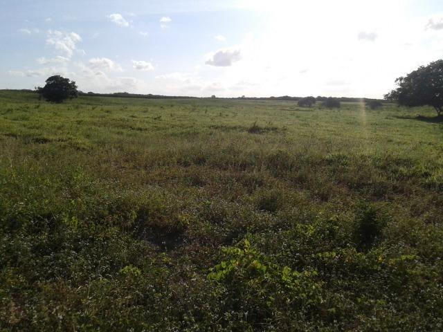 Fazenda com 290 há, casa, curral, 4 barreiros, muito pasto - Foto 11