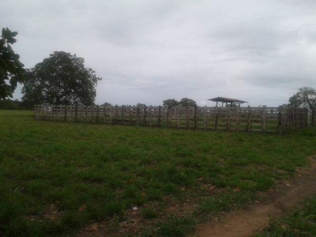 Fazenda com 63 há em brejinho, 10 barreiros, curral - Foto 17