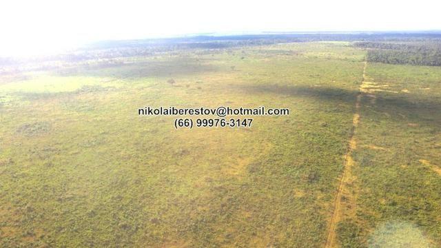 Fazenda Arrenda 2.000 hectares pra lavoura nordeste mt nikolaiimoveis
