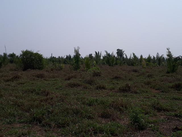 Sítios Chácaras e Fazendas em Rondônia