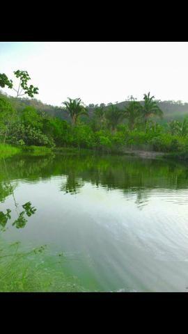 Vendo Fazenda de 122 hectares com psicultura - Foto 15