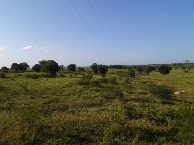 Fazenda com 290 há, casa, curral, 4 barreiros, muito pasto - Foto 3