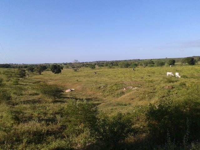 Fazenda com 290 há, casa, curral, 4 barreiros, muito pasto - Foto 5